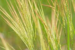 Gräset är grön naturlig bakgrund Royaltyfria Foton