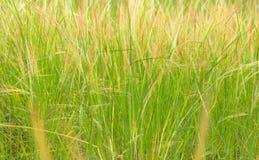 Gräset är röd-gräsplan bakgrund Arkivfoton