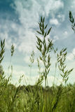 Gräset Royaltyfria Bilder