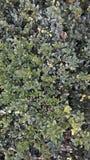 Gräset Royaltyfria Foton