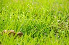Gräset Royaltyfri Foto