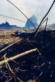 Gräset bränner, branden av som förstör allt i dess bana royaltyfri fotografi