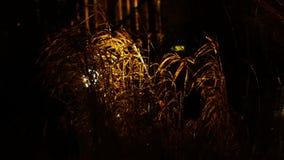 Gräset i regnet i lyktaljuset lager videofilmer