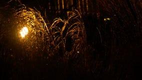 Gräset i regnet i lyktaljuset stock video