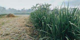 Gräset med gröna sidor, är mycket kallt naturligt arkivbilder