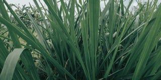 Gräset med gröna sidor, är mycket kallt naturligt royaltyfri fotografi