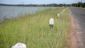 Gräset nära behållaren lager videofilmer
