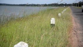 Gräset nära behållaren stock video
