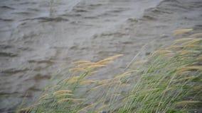 Gräset nära behållaren arkivfilmer