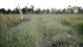 Gräset och vinden arkivfilmer