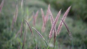 Gräset och vinden lager videofilmer