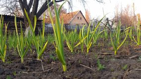 gräset på bakgrunden av det lantliga huset Arkivbilder