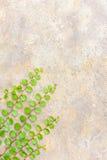 Gräset på betong royaltyfria bilder