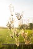 Gräset på ljuset Arkivbild