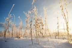 Gräset på snöbakgrunden stammar av gräset i snö Arkivfoton