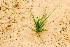 Gräset växer upp ensamt, som en affärsidéstart framkallar Royaltyfri Bild