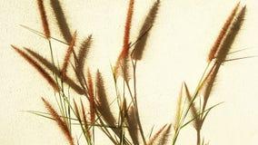 Gräset var solbränt i eftermiddagen royaltyfria foton