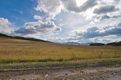 Gräsfält fotografering för bildbyråer