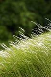 Gräsfält Royaltyfria Bilder