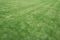 Gräsfält i fotbollsarenan Bruk som textur och bakgrund Arkivbild