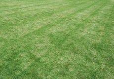 Gräsfält i fotbollsarenan Bruk som textur och bakgrund Royaltyfri Fotografi