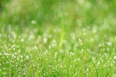 Gräsfält med dagg i morgonen Arkivfoton