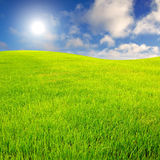 Gräsfält med himmel Arkivbild