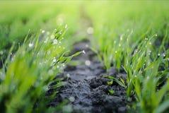 Gräsfält med morgondagg och dimma royaltyfria bilder