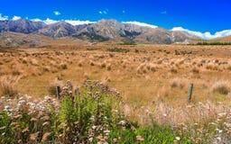 Gräsfält med rock- och bergbakgrund Fotografering för Bildbyråer