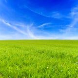 Gräsfält och blå himmel Arkivbilder