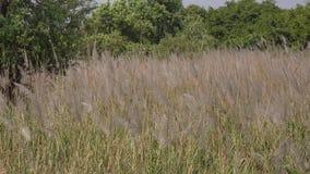 Gräsfält på den soliga dagen arkivfilmer