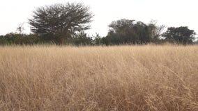 Gräsfält på hösten lager videofilmer
