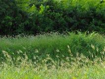 Gräsfältet Royaltyfria Bilder