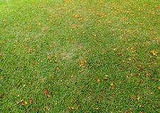 Gräsfältet täckas med gula, röda orange kronblad genom hela området fotografering för bildbyråer