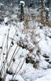 Gräsfilialer som täckas i snö med en snöig grässlätt i bakgrunden Royaltyfri Bild