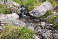 gräsfjädern stenar genomskinligt vatten Fotografering för Bildbyråer