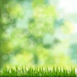 Gräsgräns på naturlig grön bakgrund Arkivfoto