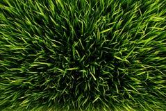 gräsgreen