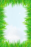 gräsgreen Fotografering för Bildbyråer