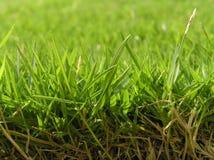 gräsgreen royaltyfri foto