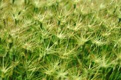 gräsgreen Arkivbild