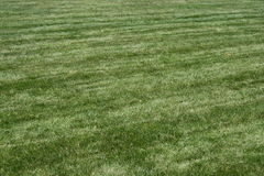 gräsgreen Royaltyfri Fotografi