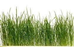 gräsgreen royaltyfri bild
