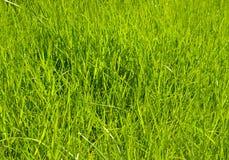gräsgreen Arkivfoto