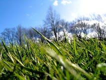 gräsgreen ii Royaltyfri Foto
