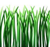 gräsgreen isolerade lawn vektor illustrationer