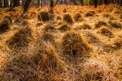 Gräsgrupp Arkivfoto