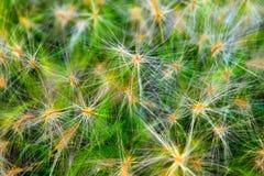 gräshår Royaltyfria Bilder