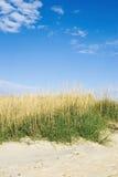 gräshav Arkivbild