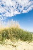 gräshav Arkivbilder